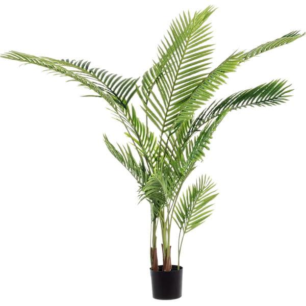 Pflanze Kenzia mit Topf Höhe 160