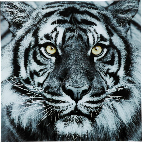 Bild Glas Face Tiger 80x80cm