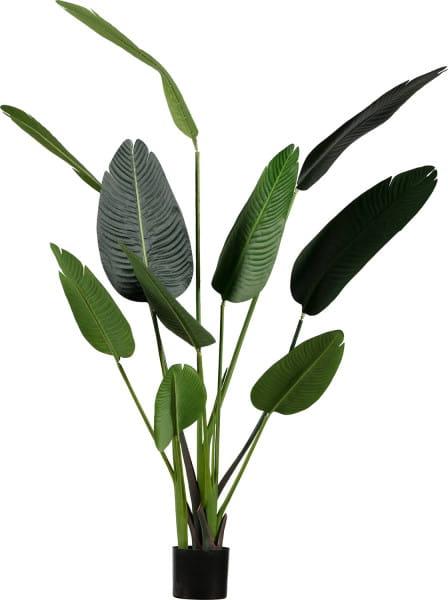 Deko Pflanze Strelitzia 164cm